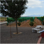Destination Picture 2 for Cella Vineyard