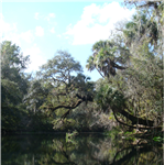 Destination Picture 8 for Hillsborough River State Park
