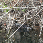 Destination Picture 10 for Hillsborough River State Park